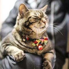 猫派の旦那と犬派のわたし/保護猫/リミアペット同好会/にゃんこ同好会/フォロー大歓迎 まるさま  うっとり顔    ダーリンと…