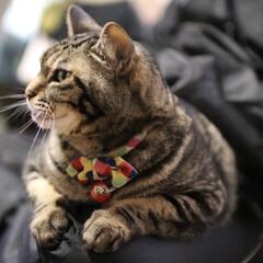 フォロー大歓迎/リミアペット同好会/猫派の旦那と犬派のわたし/にゃんこ同好会/保護猫/暮らし ダーリンは、私のものよ! あんたには、…