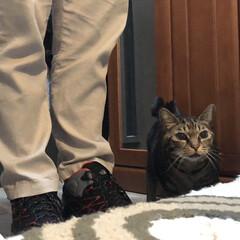 猫/猫派の旦那と犬派のわたし/ありがとう平成/フォロー大歓迎/LIMIAペット同好会/にゃんこ同好会/... 嫁がいじめるので。。。  私、ダーリンと…