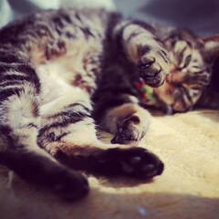 猫派の旦那と犬派のわたし/LIMIAペット同好会/フォロー大歓迎/ペット/ペット仲間募集/猫/... まるたん   寝ぼけながらのねこパンチ👊…