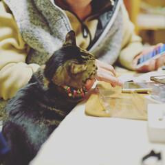 保護猫/リミアペット同好会/にゃんこ同好会/猫派の旦那と犬派のわたし/暮らし/フォロー大歓迎 寒くなってくると  ラブラブ💓度が、益々…