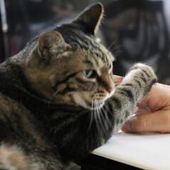猫/猫派の旦那と犬派のわたし/フォロー大歓迎/LIMIAペット同好会/にゃんこ同好会 まるさま、お怒り💢