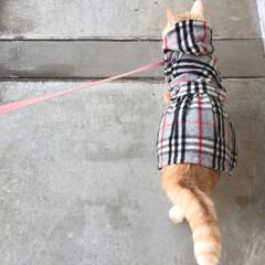 猫のお洋服/かわいい/Happy/楽しい暮らし/オシャレキャット/お散歩/... おにゃん歩...♪*゚大好き🍀🐈🍀 ..…