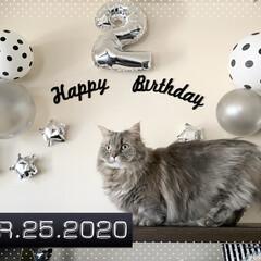 LIMIAぺット同好会/pidan/お誕生日飾り/happybirthday/LIMIA/ミヌエット/... 2歳のお誕生日🎂🎉 これからも元気に楽し…