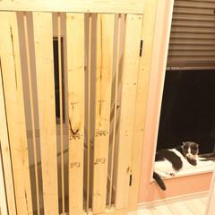 手作りドア/ペットゲート/令和元年フォト投稿キャンペーン/令和の一枚/LIMIAファンクラブ/DIY/... 我が家は二階がリビングなので、一階の玄関…(1枚目)