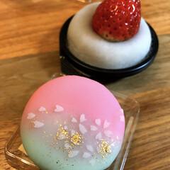 和菓子/いちご大福/グルメ/フード/スイーツ . 春らしいお菓子を見つけたのでついつい…