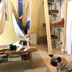 ソーホースブラケット/ハンモックチェア/フォロー大歓迎/DIY/住まい DIYのハンモックチェア。 人が座らない…(3枚目)