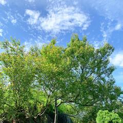 空/リフレッシュ/令和の一枚/はじめてフォト投稿/フォロー大歓迎/至福のひととき/... 強羅公園にてパシャリ♡ 清々しい空と花達…