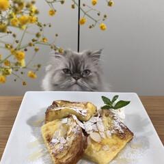 フレンチトースト/ねこのいる生活/自慢のペット/猫のいる暮らし/うちの子ベストショット/おうちカフェ/... 美味しくできました😋