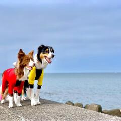 海/わんこ/ボーダーコリー/いぬ/おでかけ 海散歩🏖🌊