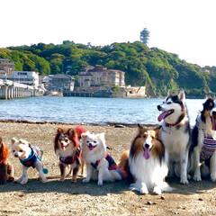 神奈川県/江ノ島/お出かけ/わんこ/いぬ/フォロー大歓迎/... 職場のスタッフ&スタッフ犬達で江ノ島へ❤…