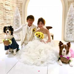 結婚/花嫁姿/綺麗/夫婦/感動/生まれてきてくれてありがとう/... 健斗&茜   結婚 おめでとう🤵💒💍👰 …