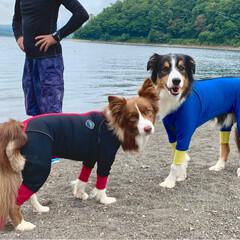 犬連れSUP/湖SUP/わんこ/いぬ/大好き/ボーダーコリー/... 勿論🐶派😊💕💕
