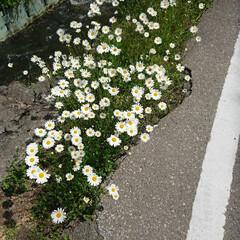 令和元年フォト投稿キャンペーン/風景 群生してるの可愛い(*´∀`)(1枚目)