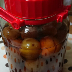 令和の一枚/暮らし/至福のひととき 初めての梅酒作り。 出来上がりが楽しみ(…(1枚目)