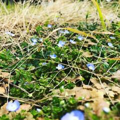 風景/小さい春 ちっちゃくても頑張ってますね😊