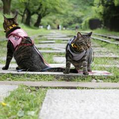 颯/輝/トラ猫/キジトラ/猫/フォロー大歓迎/... 映画のワンシーンのような… (2枚目)