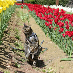 トラ猫/キジトラ/颯/輝/平成最後の一枚/春のフォト投稿キャンペーン/...