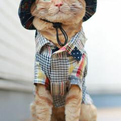 トラ猫/福ちゃん/茶トラ/猫/最近のコーデ 外出自粛 ベランダで我慢