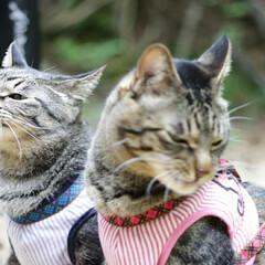 おでかけ猫/颯/輝/トラ猫/キジトラ/猫 ひさびさのお散歩🐾 小川でひと休み🌌(5枚目)