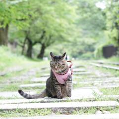 颯/輝/トラ猫/キジトラ/猫/フォロー大歓迎/... 映画のワンシーンのような… (5枚目)