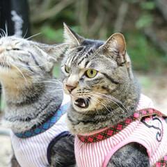 おでかけ猫/颯/輝/トラ猫/キジトラ/猫 ひさびさのお散歩🐾 小川でひと休み🌌(7枚目)
