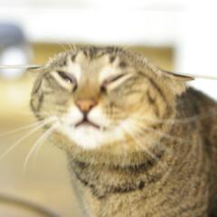 颯/トラ猫/キジトラ/猫 僕はこの線を越えてみせる~(2枚目)