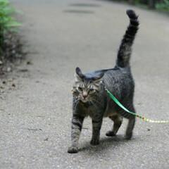 颯/トラ猫/キジトラ/猫/フォロー大歓迎/にゃんこ同好会/... ターーーッチ❕(5枚目)