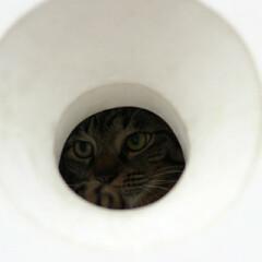 猫/キジトラ/トラ猫/輝/おでかけ猫 お散歩中に丸い穴を見つけたにゃ🔴 (2枚目)