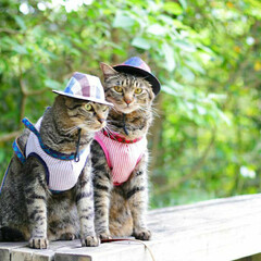 おでかけ猫/颯/輝/トラ猫/キジトラ/猫 ベンチでひと休み(1枚目)