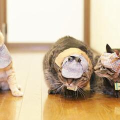 颯/輝/福ちゃん/トラ猫/キジトラ/茶トラ/... 3にゃん、旅に出る🐾(2枚目)