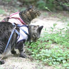 おでかけ猫/颯/輝/トラ猫/キジトラ/猫 ひさびさのお散歩🐾 小川でひと休み🌌(2枚目)