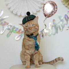 福ちゃん/トラ猫/茶トラ/猫/にゃんこ同好会/うちの子ベストショット 福ちゃん5歳のお誕生日🎂(1枚目)