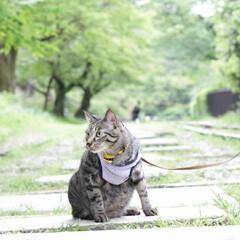 颯/輝/トラ猫/キジトラ/猫/フォロー大歓迎/... 映画のワンシーンのような… (4枚目)