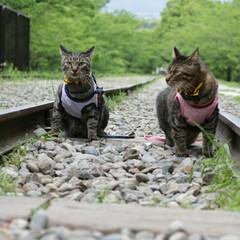 颯/輝/トラ猫/キジトラ/猫/フォロー大歓迎/... 映画のワンシーンのような… (1枚目)