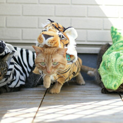 颯/輝/福ちゃん/トラ猫/キジトラ/茶トラ/... 可愛い動物園 虎福🐅 シマウマ輝🦓 ワニ…(2枚目)
