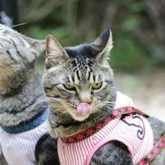 おでかけ猫/颯/輝/トラ猫/キジトラ/猫 ひさびさのお散歩🐾 小川でひと休み🌌(6枚目)