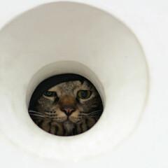 猫/キジトラ/トラ猫/輝/おでかけ猫 お散歩中に丸い穴を見つけたにゃ🔴