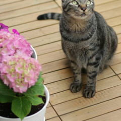 輝/トラ猫/キジトラ/猫 すていほーむ、 暇なのでお花の植え替え💠(2枚目)