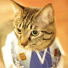 猫猫寺/おでかけ猫/輝/トラ猫/キジトラ/猫 だるまさんと輝ちゃん(4枚目)