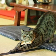 輝/トラ猫/キジトラ/猫/フォロー大歓迎/にゃんこ同好会/... 猫猫寺で修行(1枚目)