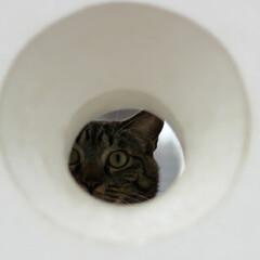 猫/キジトラ/トラ猫/輝/おでかけ猫 お散歩中に丸い穴を見つけたにゃ🔴 (3枚目)