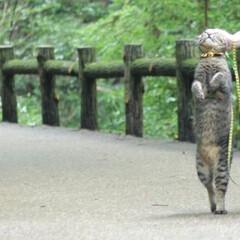 颯/トラ猫/キジトラ/猫/フォロー大歓迎/にゃんこ同好会/... ターーーッチ❕(1枚目)