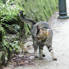 颯/トラ猫/キジトラ/猫/フォロー大歓迎/にゃんこ同好会/... ターーーッチ❕(3枚目)