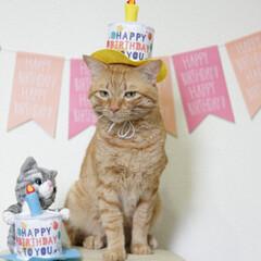 福ちゃん/トラ猫/茶トラ/猫 9月7日は福ちゃんの6歳の お誕生日でし…(3枚目)