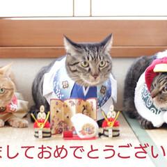 トラ猫/キジトラ/茶トラ/颯/輝/福ちゃん/... 明けましておめでとうございます㊗️ (1枚目)