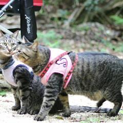 おでかけ猫/颯/輝/トラ猫/キジトラ/猫 ひさびさのお散歩🐾 小川でひと休み🌌(3枚目)