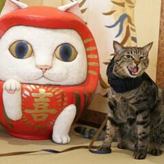 猫猫寺/おでかけ猫/輝/トラ猫/キジトラ/猫 だるまさんと輝ちゃん