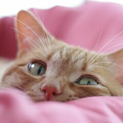 福ちゃん/トラ猫/茶トラ/猫/フォロー大歓迎/にゃんこ同好会 お昼寝の邪魔するにゃ(1枚目)