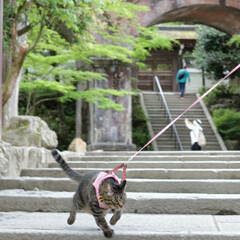 颯/トラ猫/キジトラ/フォロー大歓迎/LIMIAペット同好会/にゃんこ同好会/... モデル颯✨(4枚目)